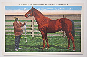 Man-o-war Postcard