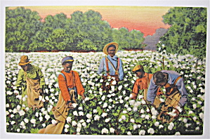 A Busy Day In The Cotton Field Postcard