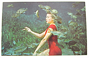 Pretty Betty Frazee Poses With School Of Fish Postcard