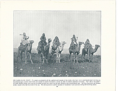 Riding Camels In Egypt 1892 Shepp's Photographs Original Book Page
