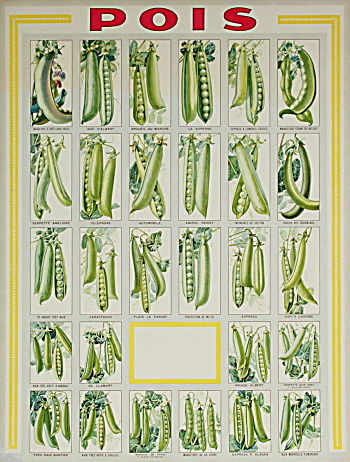 "Antique French Peas ""pois"" Poster C.1900"