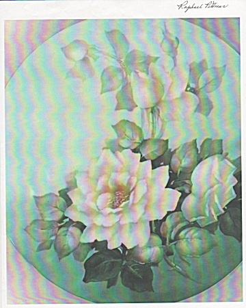 White Roses - Nancy Fisher - Large Flower