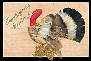 Real Feather Thanksgiving Turkey 1910 Postcard
