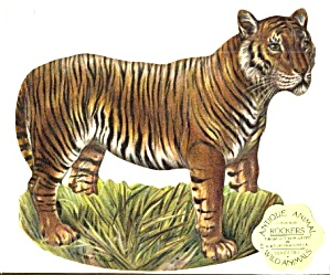 Antique Reproduction Tiger Rocker Card