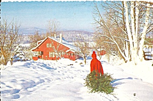 Christmas Postcard Bringing In The Tree Cs11345