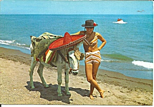 Costa Del Sol Spain The Donkey Has Soluchni Ma Cs11775