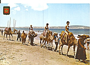 Tangier Morocco The Seaside Camels Cs11797