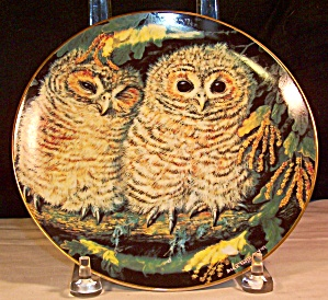 Tawny Owls By Dick Twinney,baby Owls Collection