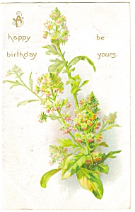 Birthday Tuck S Postcard P12809 1908