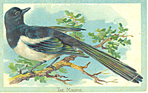 The Magpie Raphael Tuck Postcard P18901